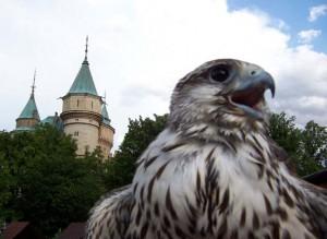 Falconers Aquila Bojnice